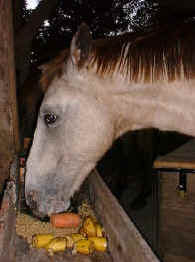 horse food in the tropical rainforest