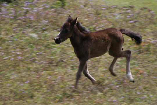 our best foal ever in Monteverde Costa Rica