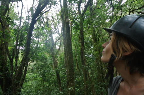 Experienced rider in the Cloud Forest