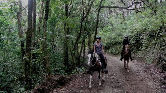 Smiling Horses in the Cloud Forest Monteverde